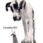 Assertività, cosa fare quando abbiamo la tendenza a compiacere gli altri immagine1 www.psicologo-a-torino.it