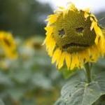 Sei a disagio quando ti senti triste immagine 2 www.psicologo-a-torino.it